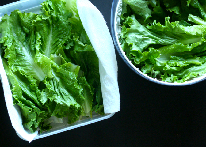 Washed Lettuce in Container